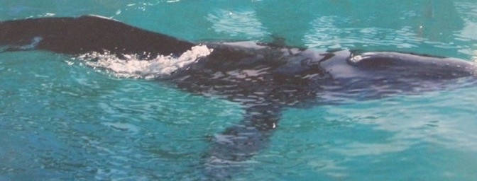Walhaie: Unsere Begegnung mit den größten Fischen der Welt – im offenen Meer!