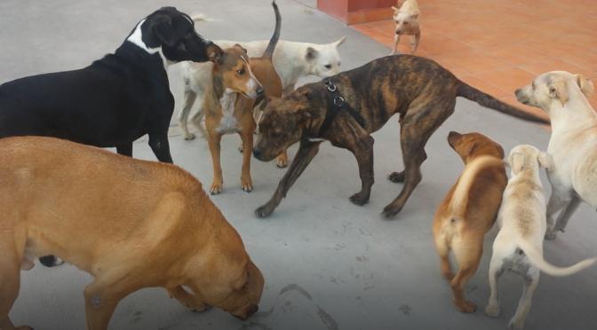 Mexiko: Inmitten einer Meute von Straßenhunden